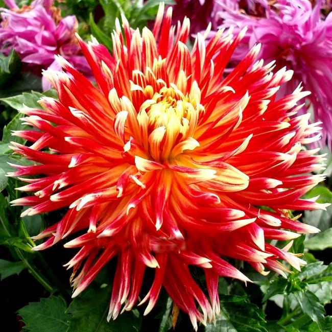 Вьющиеся домашние цветы фото с названиями